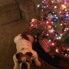Meaty loves the tree'
