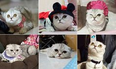The next grumpy cat: Meet the cat who looks permanently sad #DailyMail