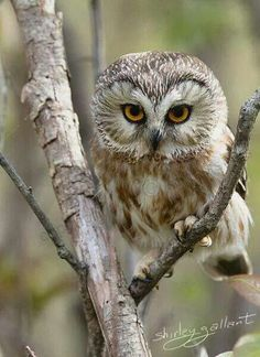 There is very little that holds a place in my heart over owls..