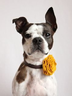 Felt flower for the lady pups collars! Found this pic on Etsy.