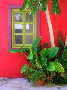 Fiskardo, Kefalonia, Greece Often homes near water are painted colorfully and I love it.