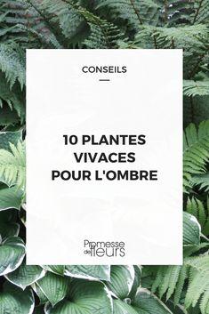 Compose a shade shade which vegetation to decide on Garden Trellis, Balcony Garden, Garden Fencing, Herb Garden, Amazing Gardens, Beautiful Gardens, Mediterranean Garden, Garden Signs, Plantar