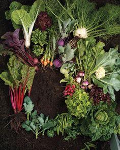 Time to start planning my summer garden-