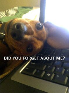 Well - we are good at reminding you. ) - photo via Crusoe the Celebrity Dachshund fb page Funny Animal Pictures, Dog Pictures, Funny Animals, Cute Animals, Funny Photos, I Love Dogs, Cute Dogs, Humor Animal, Animal Sayings