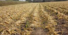 El Programa de Atención a Contingencias Climatológicas (PACC), apoyará a los campesinos afectados por daños catastróficos.