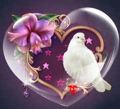 Flower Phone Wallpaper, Heart Wallpaper, Love Wallpaper, Beautiful Love Pictures, Beautiful Gif, Beautiful Birds, Love You Gif, Love You Images, Dove Images