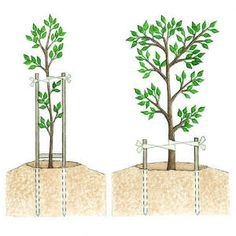 Competent guided aquaponics DIY backyard Take a look at Tree Stakes, Cool Things To Make, Things To Come, Tree Support, Growing Grapes, Aquaponics System, Hydroponics, Deciduous Trees, Plant Growth