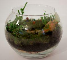 Golf terrarium