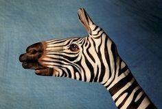 We love Italian artist Guido Daniele's animal hand art! Here a simple pose creates a zebra. Finger Painting, Hand Painting Art, Zebra Painting, Hand Kunst, Culture Art, Tatoo Art, Art Et Illustration, Like Animals, Animals Amazing