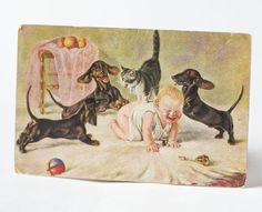 Antique postcard baby dogs cat  unusual postcard crying by 4Rooms