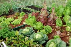 Square Foot Gardening, Dream Garden, Country Life, Garden Plants, Good To Know, Herbs, Backyard, Vegetables, Outdoors