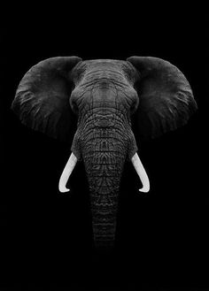 Black Elephant animal animals background iphone wallpaper wallpaper iphone you didn't know existed planet animal drawings and white animal photography animals baby animals animals animals Photo Elephant, Elephant Pictures, Elephants Photos, Elephant Love, Elephant Art, Elephant Tattoos, African Elephant, African Animals, Elephant Poster