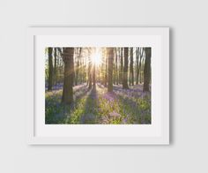 Bluebell Forest Print, Tree Art, 8 x 10 inches. Bluebell Forest print - perfect for the home! This makes a great wedding gift, anniversary gift, housewarming gift or a special print just for yourself. This print is professionally printed on high quality professional paper, giving it a slightly glossy sheen and crisp colors. All prints are shipped in an hardback envelope, packed by myself and treated with care to ensure they arrive in perfect condition. Please note our prints are NOT…