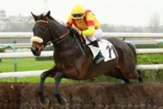 mardi 16 décembre 2014 - pau haies 3500 mètres 17 chevaux http://les-amis-du.pmu-pronostics.com mon choix 9 6 4 5 3 11 7 2 1