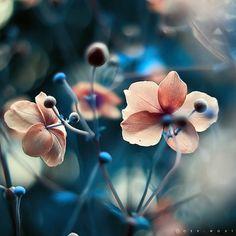 such marvelous colors.