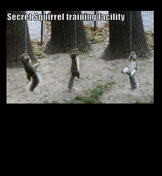 funny photos, squirrel training camp, squirrels climbing ropes