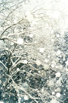 Snowy Bliss.