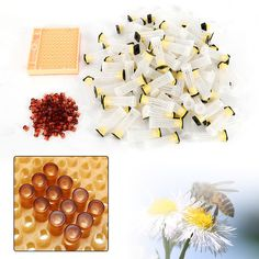 110pc Cell Cups Cupkit Complete Bee Queen Rearing System Beekeeping Box Case Set (eBay Link)