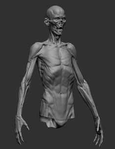 Exceptional Drawing The Human Figure Ideas. Staggering Drawing The Human Figure Ideas. Zbrush Anatomy, Human Anatomy Art, Human Anatomy For Artists, 3d Anatomy, Anatomy Models, Anatomy Sketches, Muscle Anatomy, Anatomy Study, Anatomy Drawing