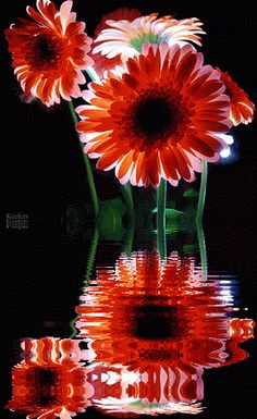 animated flower water reflections gif | animated gif animated flowers beautiful flowers flowers flores ...