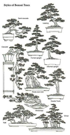 Art of Bonsai