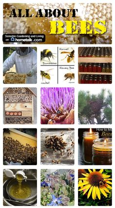Several posts about bees and combined them together in one place for easy reading. Learn about bees and their care as well as learn how to make wonderful products using beeswax. Find out which plants and gardening practices are best for attracting bees into your garden and how to build a bee box. Enjoy up close shots of our beautiful pollinators.