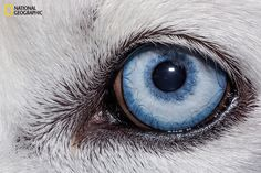Domestic dog   These Extraordinary Close-Up Photos Of Animal Eyes Look Out Of This World
