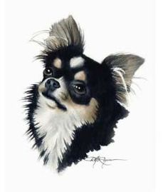 Chihuahua By David Rogers
