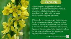 Agrimony, il fiore che favorisce l'autenticità con noi stessi e con gli altri.