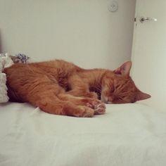 Minulla on unikaverina 16-vuotias Nelli-kissa
