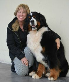 I wish it's me there with a Bernese mountain dog