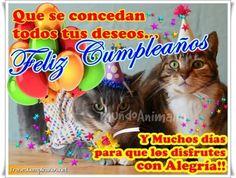 Hola amigos aquí les traigo unas lindas imágenes de gatitos lindos para cuando tus amigos o contactos de la red social festejen su cumpleaños, deseales lo mejor con una bella imagen de gato con fre…