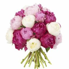 Mixed Peonie Bouquet - Mixed Peonies (Available May – July)