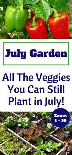 July Summer Garden - All the veggies you can still plant in July for Zone 1, 2, 3, 4, 5, 6, 7, 8, 9 and 10.