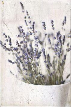 lavender #lovelylavender