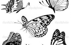 Butterfly Tattoos Black And WhiteSet Black White Butterflies Of A White Bird Tattoos, Butterfly With Flowers Tattoo, Mens Butterfly Tattoo, Butterfly Images, Butterfly Drawing, Butterfly Tattoo Designs, Black Tattoos, Tattoo Bird, Tiny Tattoo