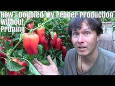 How I Doubled My Pepper Production Without Pruning… – Eco Snippets Tips For Growing Tomatoes, Growing Peppers, Bell Pepper Plant, Pepper Plants, Hydroponic Gardening, Container Gardening, Gardening Books, Vegetable Gardening, Worm Composting