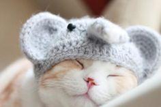 cute-cute-et-cute: ⭐