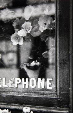 Brassai, Le Chat du Fleuriste, 1938.