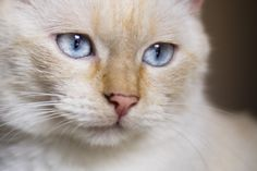 Treacle Cat | Pawshake