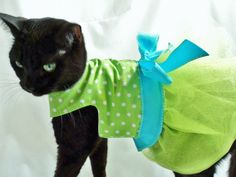 Cat Clothes Easter Lime Green and Turquoise Polka Dot Tutu Cat Dress pet clothing cat clothing pet clothes