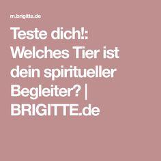 Teste dich!: Welches Tier ist dein spiritueller Begleiter?   BRIGITTE.de