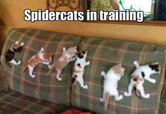 Spidercat spidercat…does whatever a spider can!!!!