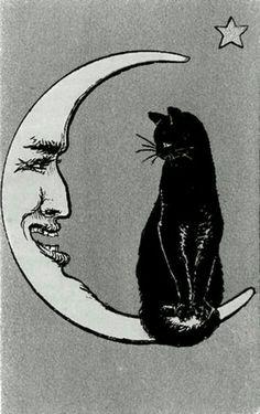 Looks like my kitty Anu..