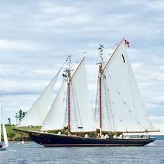 Nova Scotia, Sailing Ships, Boat, Dinghy, Boats, Sailboat, Tall Ships, Ship