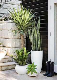 Garden Design Different pots with different plants, various heights of green - Style-savvy renovator Tara Dennis reveals how to turn plain pots into pretty planters - by Jane Parbury Patio Plants, Indoor Plants, House Plants, Front Porch Plants, Tall Potted Plants, Tall Planters, Deck Plants Ideas, Plants By The Pool, Outdoor Pots And Planters