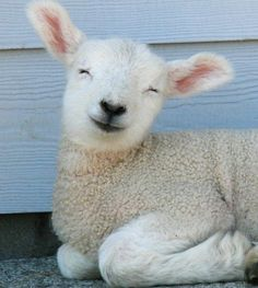 Do I have to say something about this? Also you can see how cute this lamb is.