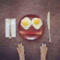 yesss! take that non-believers! faceing your food is officially art #saatchi #disconnecteddogslegs