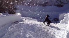 Otto fights snow (+playlist)
