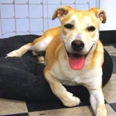 Looking for a loving lady to share your home with? Adopt MANDY! http://www.adoptapet.com/pet6800280.html